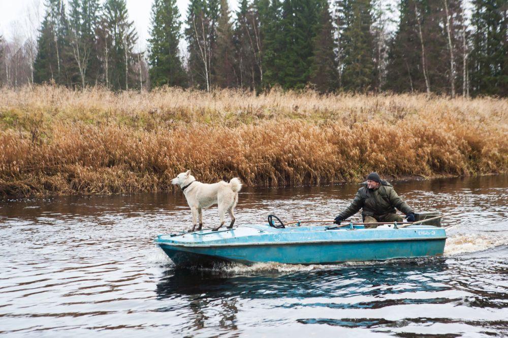 Inspetor do parque nacional russo Vodlozersky navega com cachorro pelo rio Ileksa