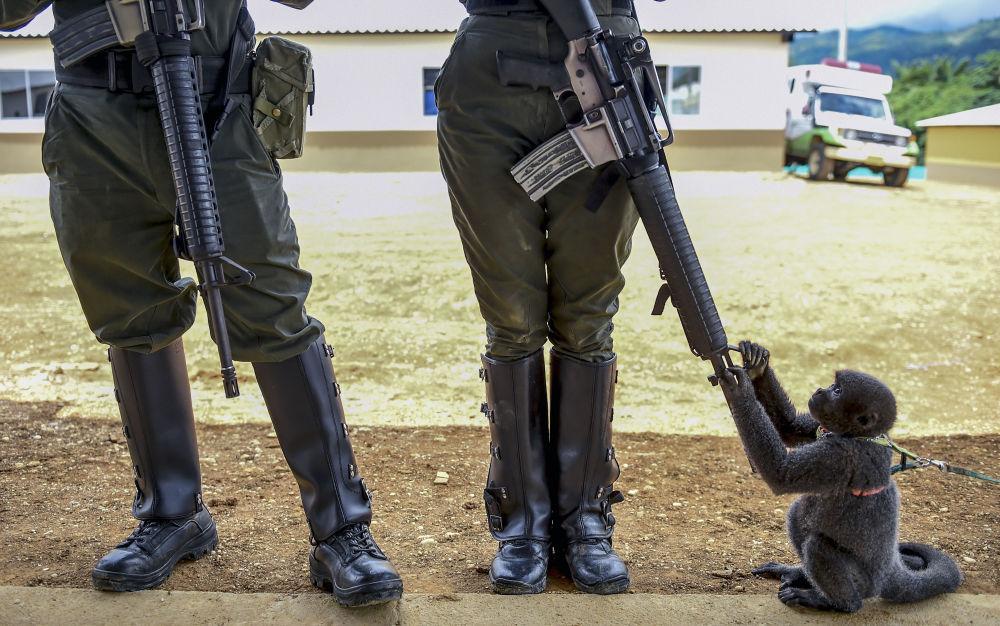 Macaco brinca com fuzil de mulher-policial na Colômbia