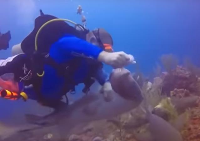 Luta violenta entre homem e tubarão por um peixe valioso