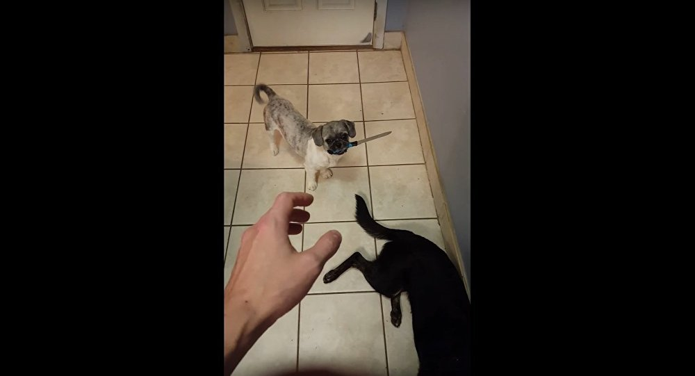 Charlie, o cão terrorista