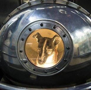 Cão Laika, primeira criatura viva no espaço, dentro da reprodução do satélite Sputnik II, na Casa Central de Aviação e Cosmonáutica em Moscou