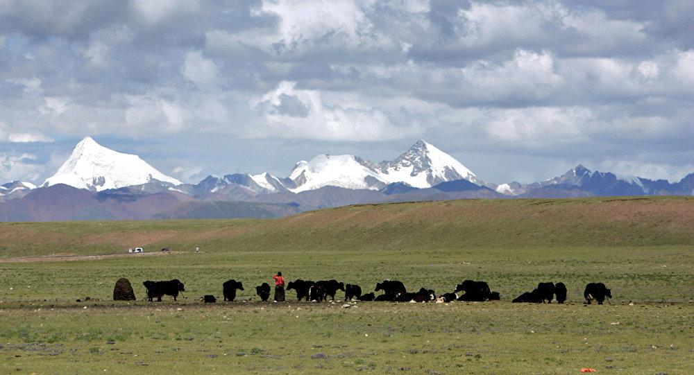 Tibetanos pastando iaques nos campos alpinos de Nagqu, na região autônoma do Tibete, China