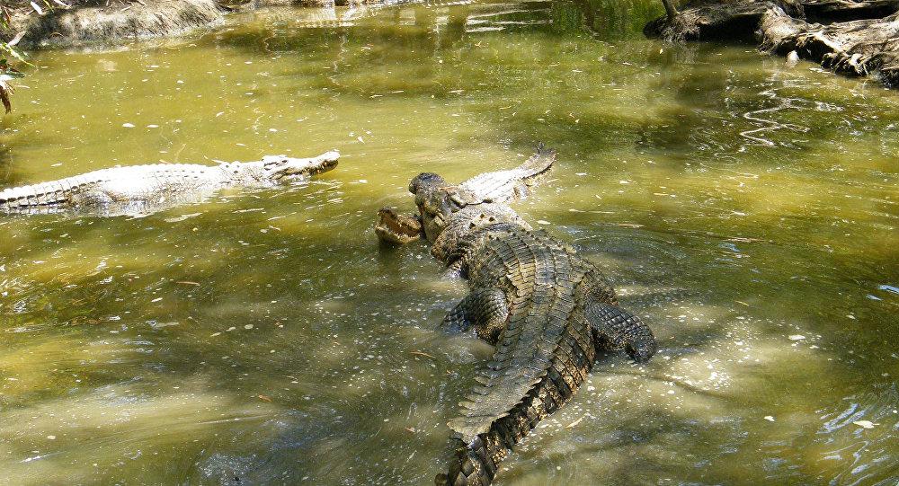 Crocodilos na Austrália