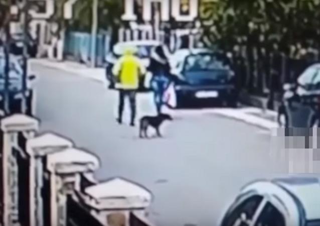 Cachorro vadio bravo salva uma mulher do ladrão
