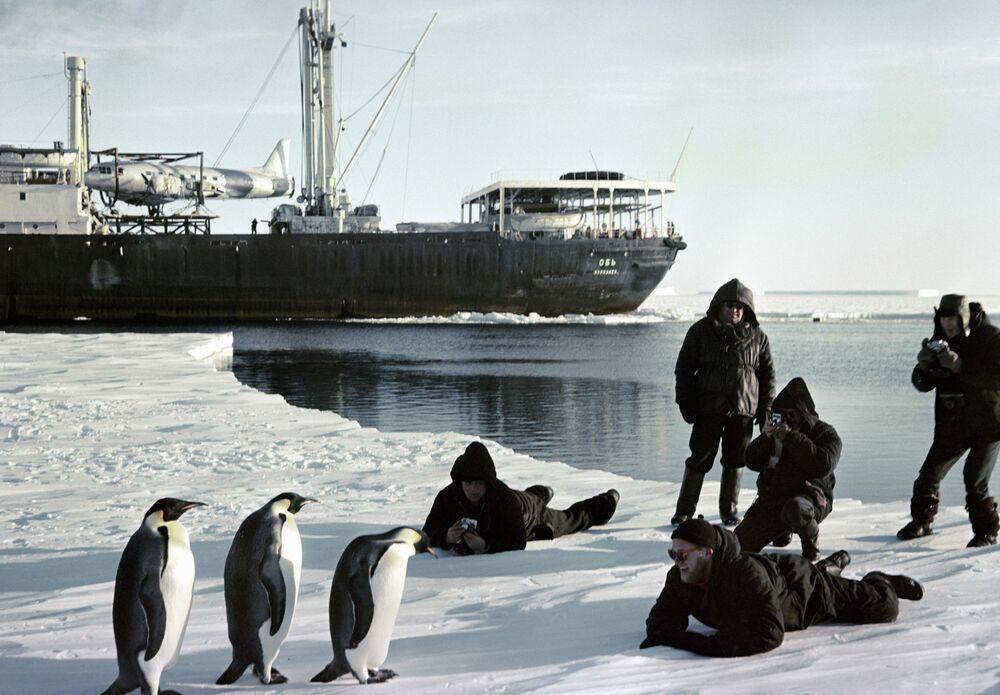 Pinguinos e marinheiros