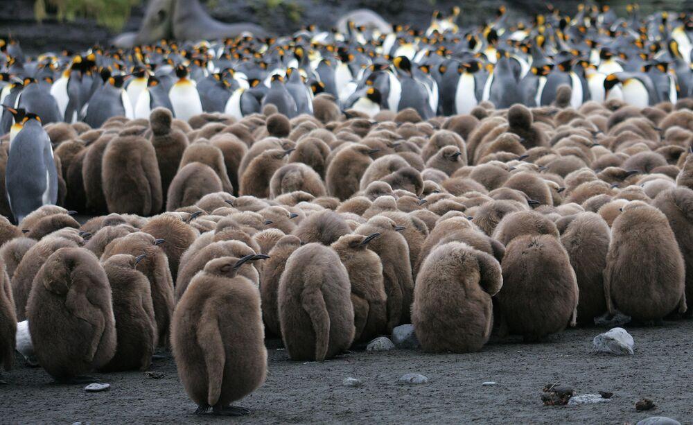 Pinguinos na Antártida