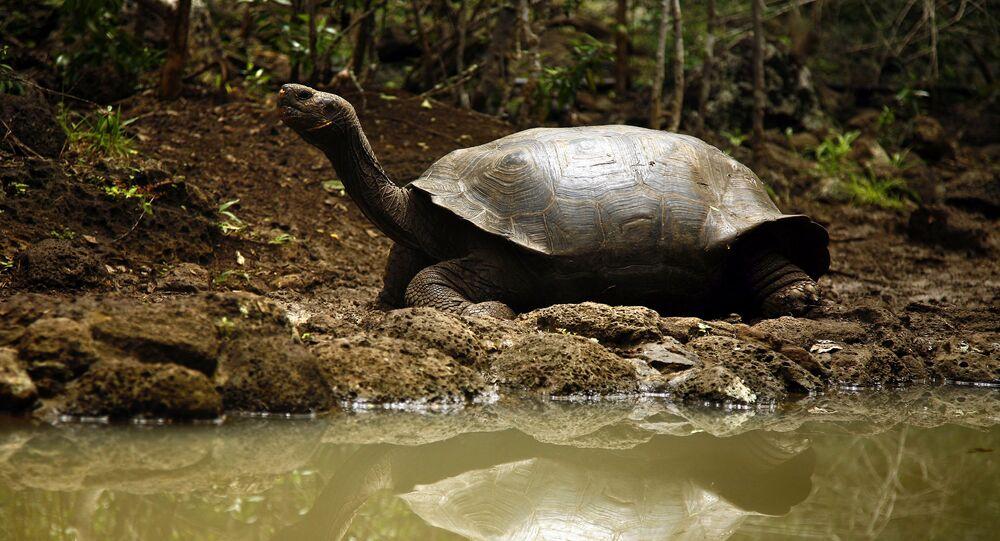 Equador - Galápagos
