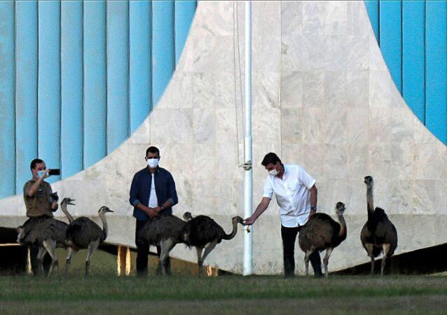 Presidente do Brasil, Jair Bolsonaro, alimenta avestruzes no Palácio da Alvorada, em Brasília, 13 de julho de 2020