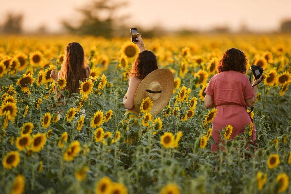 Moças admiram a beleza de campos de girassóis em Simferopol, Rússia