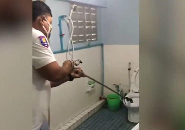 Cobra dá trabalho para ser retirada de vaso sanitário na Tailândia