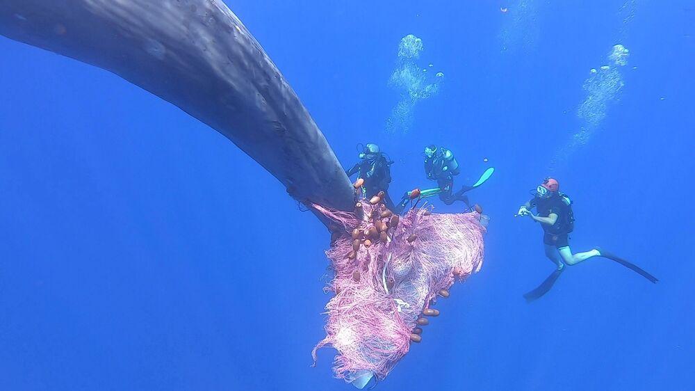 Mergulhadores da Guarda Costeira da Itália livram cachalote de rede de pesca na costa da Sicília