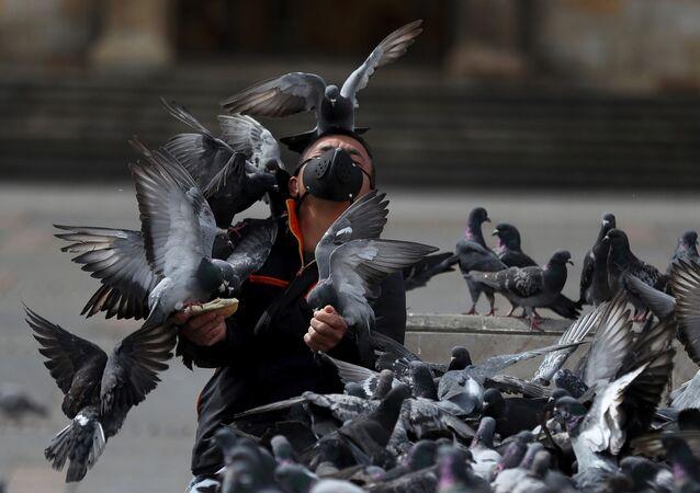 Homem alimenta pombos em Bogotá, Colômbia, se precavendo da COVID-19 ao usar uma máscara