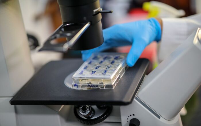 Cientista segura células que produzem anticorpos contra a doença do coronavírus (COVID-19) sob um microscópio, em um laboratório universitário em Atenas, Grécia, 8 de julho de 2020