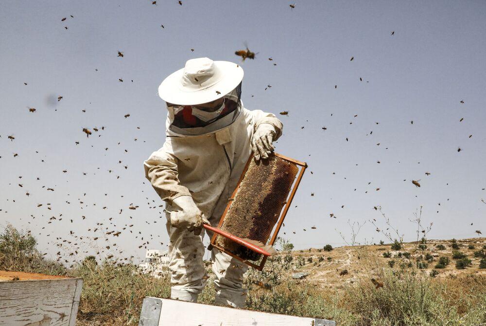 Menino palestino trabalhando no apiário de seu pai no vilarejo de Doura, a oeste de Hebron, na Cisjordânia