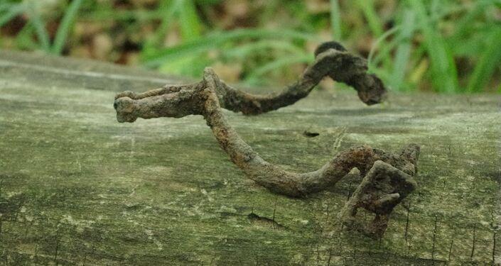 Artefato encontrado na floresta de Sanok, na Polônia