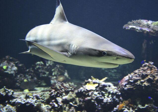 Foto de tubarão