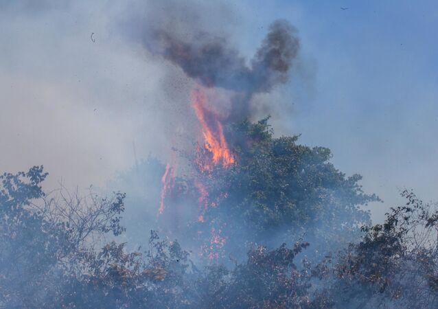 Bombeiros tentam controlar o fogo na mata na região de Poconé, Pantanal de Mato Grosso, 2 de agosto de 2020
