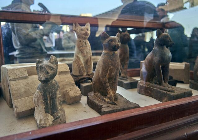 Coleção de estátuas de gatos do antigo Egito exibidas em Sacará
