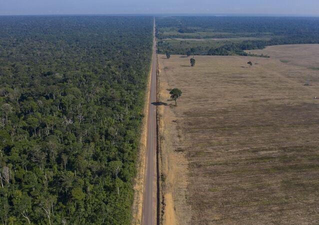 Rodovia BR-163, entre a Floresta Nacional do Tapajós e campo de cultivo de soja, em Belterra, no Pará
