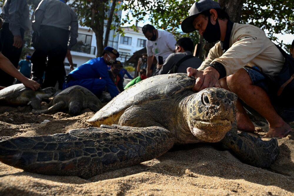 Pessoas preparam tartarugas-verdes marinhas para serem soltas ao mar na praia de Kuta, na ilha de Bali, Indonésia