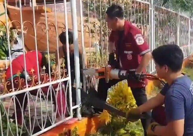 Enorme lagarto-monitor tenta escapar, mas fica preso em cerca