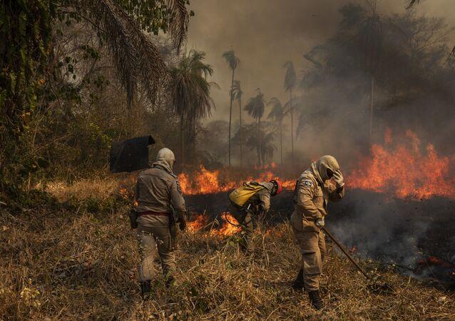 Bombeiros e brigadistas tentam combater incêndio no Pantanal