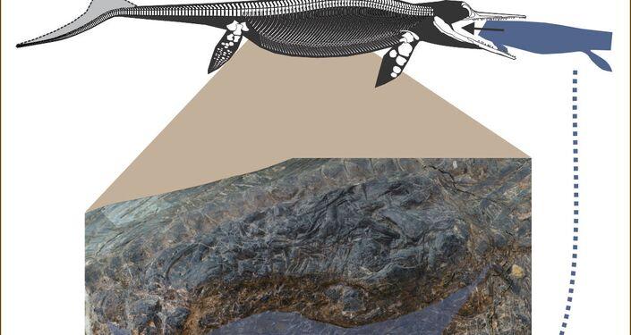 Ilustração do conteúdo do estômago do ictiossauro