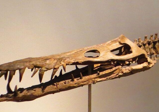Liopleurodon, réptil marinho da família dos pliossauros