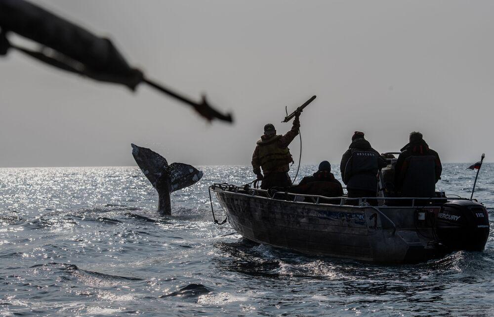 Caçadores de baleias durante a caçada no estreito de Bering