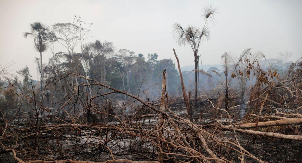 Uma área queimada da selva amazônica é desmatada por madeireiros e agricultores perto de Mirante da Serra, Rondônia, Brasil