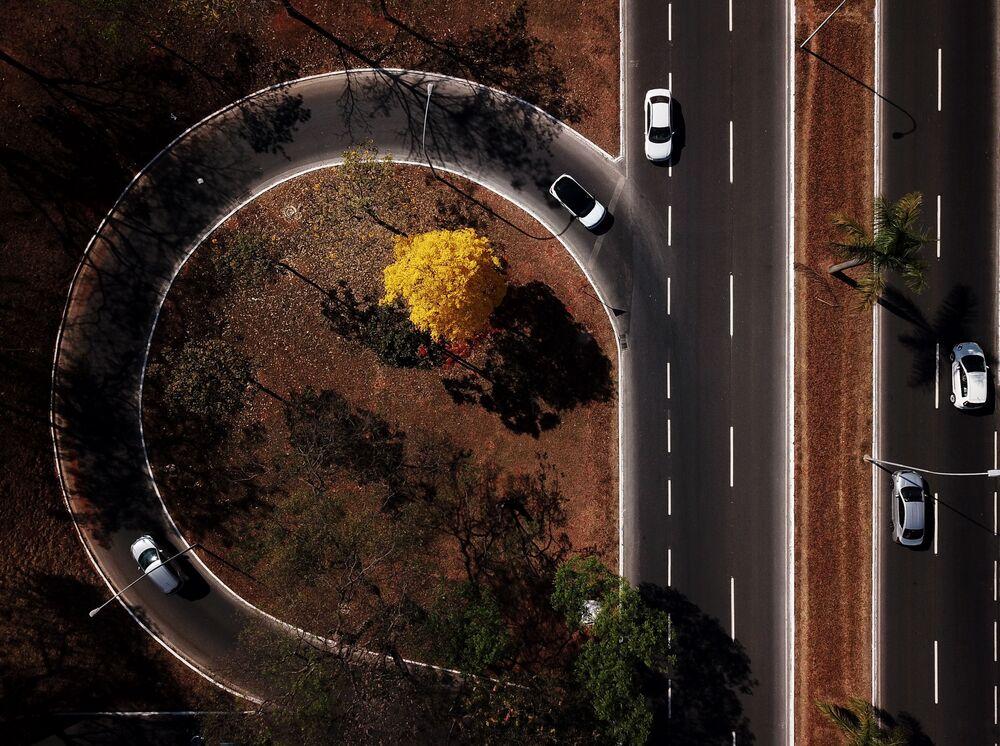 Ipê-amarelo sobressai entre outras árvores em foto aérea feita em Brasília