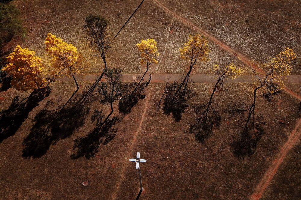 Fila de ipês-amarelos enfeita a paisagem do Distrito Federal