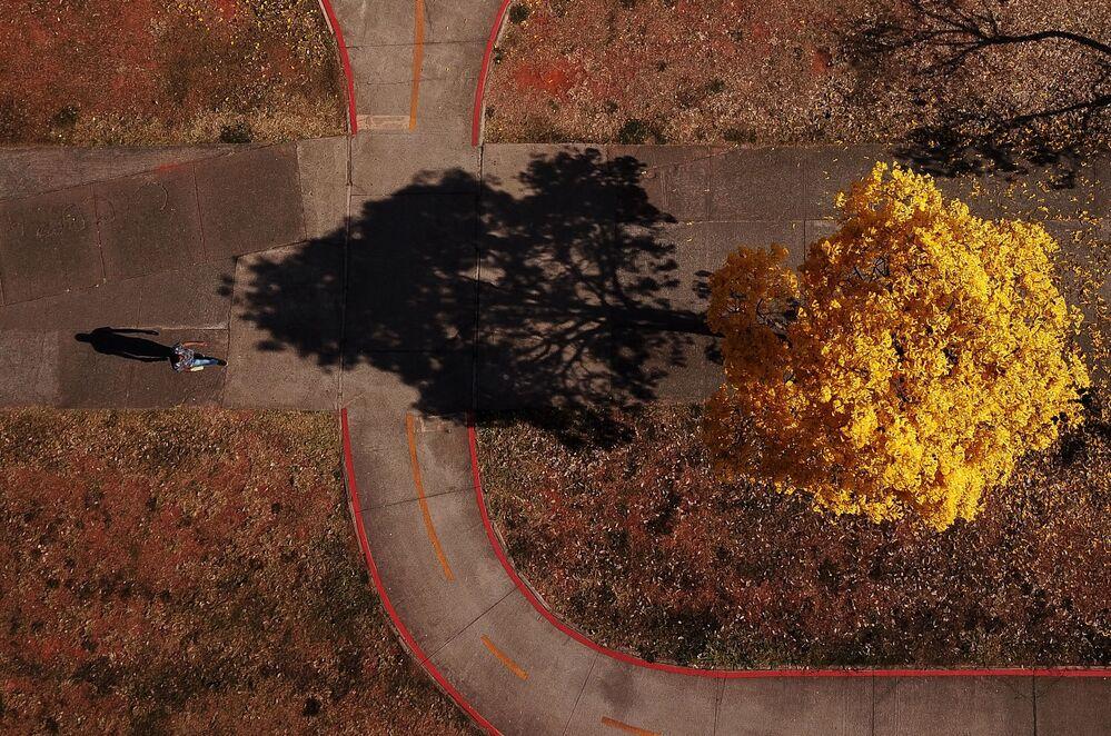 Imagem aérea mostra ipê-amarelo no cerrado brasiliense
