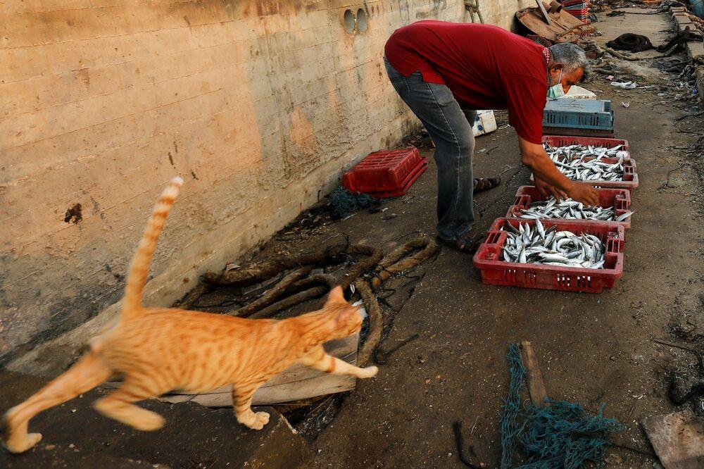 Gato passa perto de pescador com sua captura de peixe no porto de Gaza, Palestina