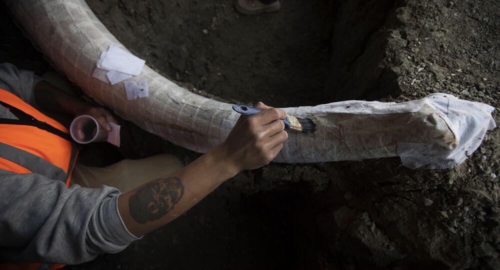 Paleontólogo trabalha para preservar o esqueleto de um mamute que foi descoberto no local de construção do novo aeroporto da Cidade do México, base militar de Santa Lucía, México, 3 de setembro de 2020