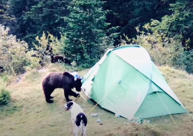 Urso e cachorro