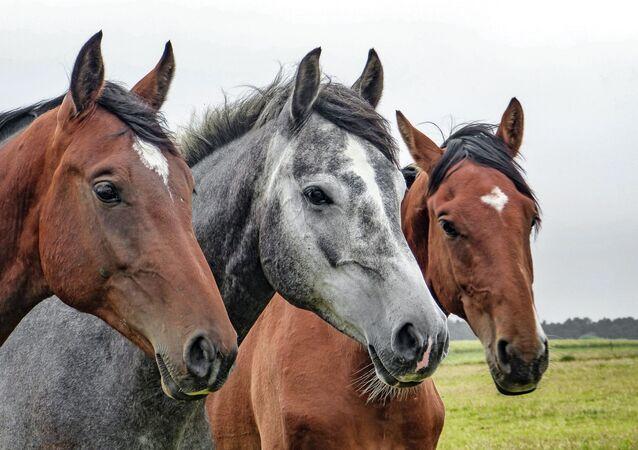 Cavalos (imagem referencial)