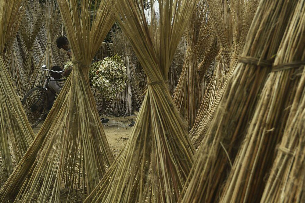 Agricultor transporta plantas em sua bicicleta na Índia