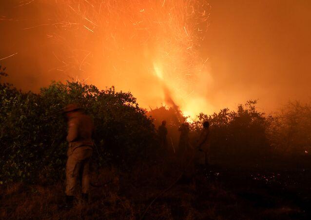 Bombeiros tentam apagar fogo no Pantanal.