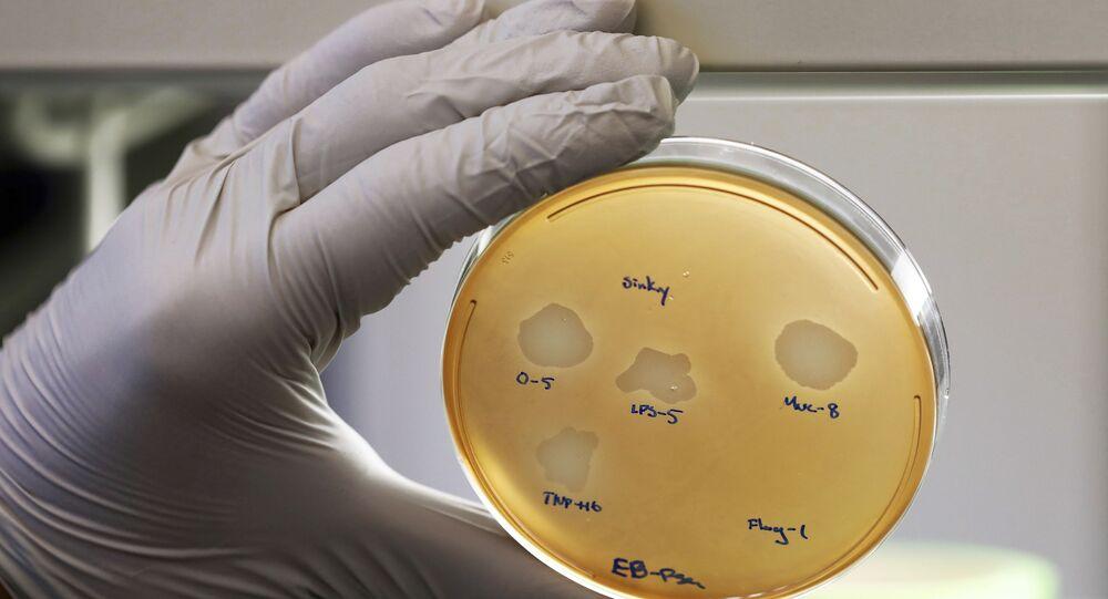 Estudo das bactérias (imagem referencial)