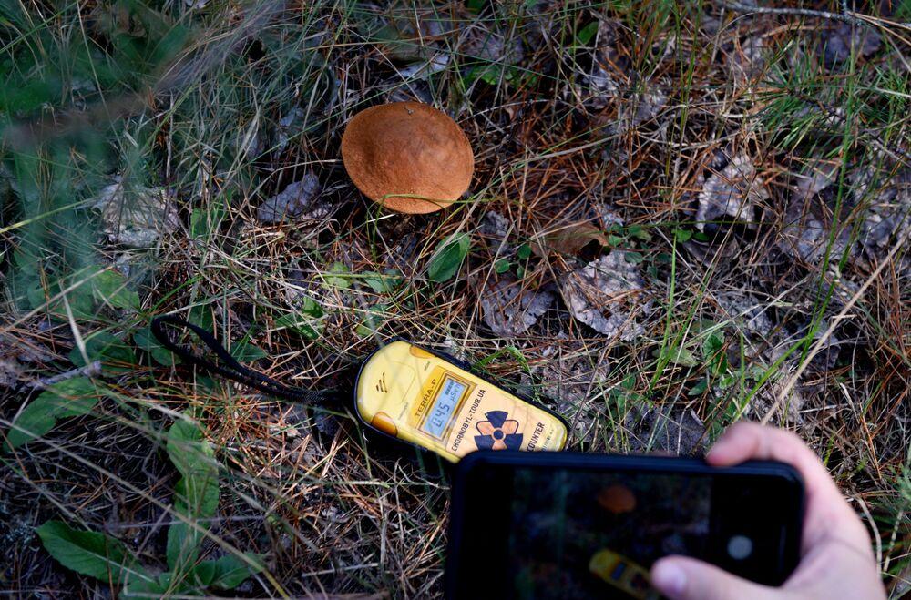 Medição do nível de radiação na zona de exclusão de Chernobyl