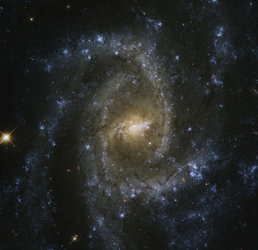 Galáxia espiral barrada (SB, na sigla em inglês) NGC 2835 na constelação Hydra