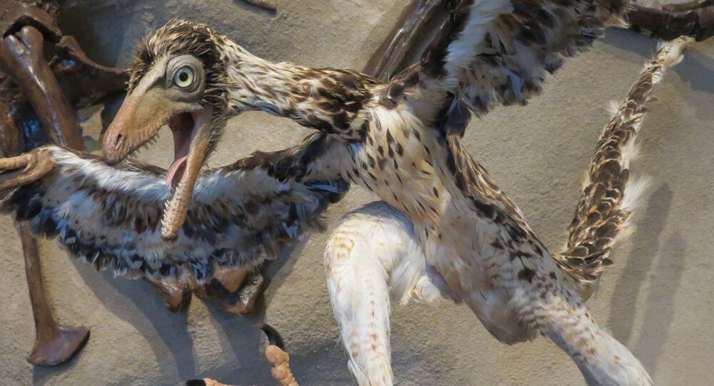 Dinossauro Archaeopteryx
