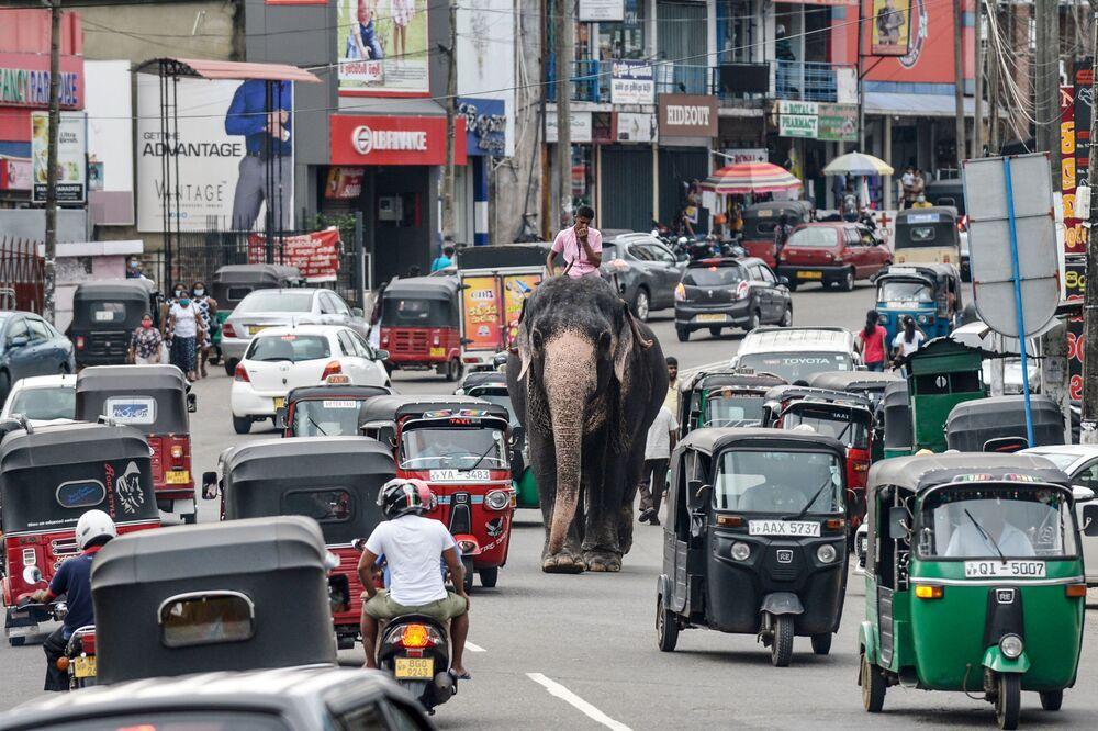 Homem passa com elefante por movimentada rua da capital do Sri Lanka