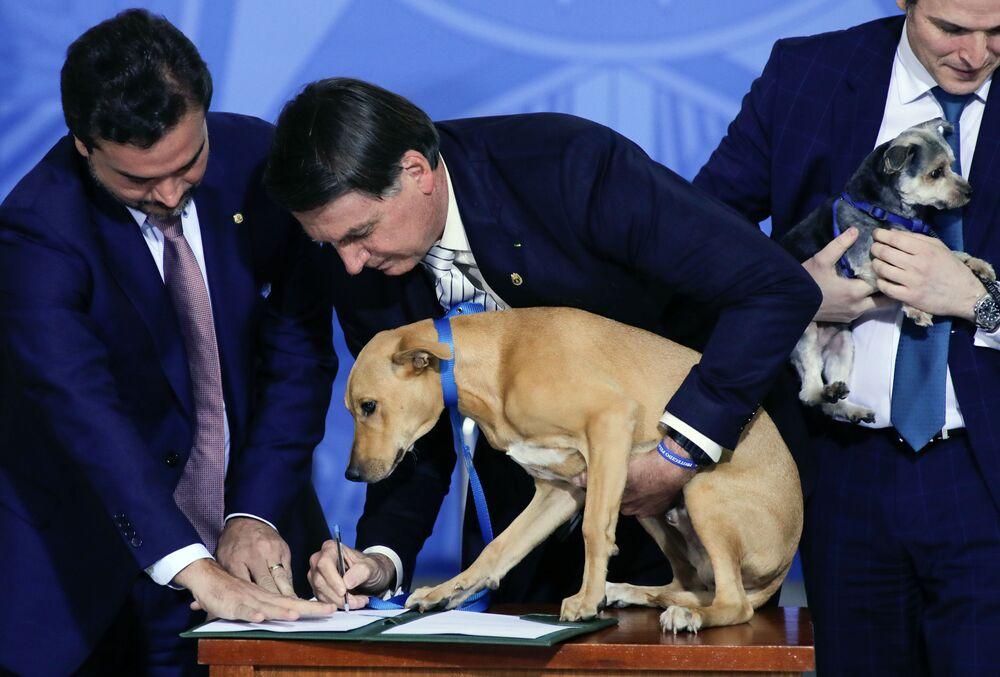 Presidente do Brasil, Jair Bolsonaro, segurando seu cachorro Nestor na hora de sancionar a lei de proteção a animais, 29 de setembro de 2020