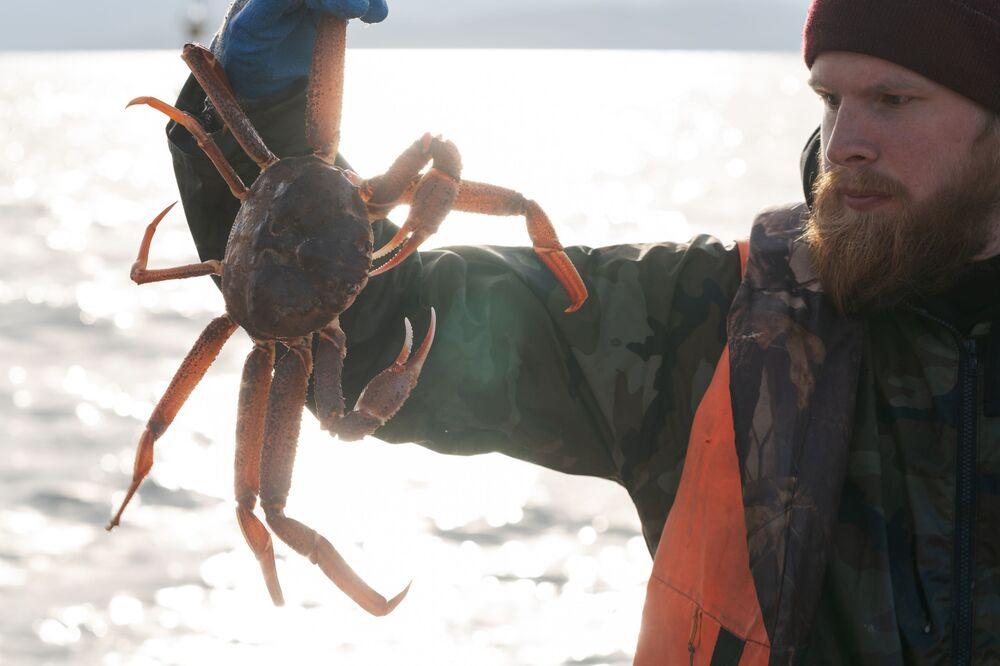 Pescador demonstra caranguejo vivo afetado por desastre ecológico em Kamchatka