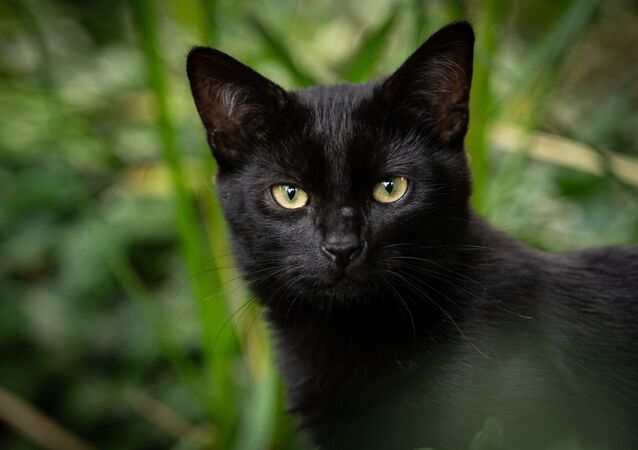 Gato (imagem referencial)