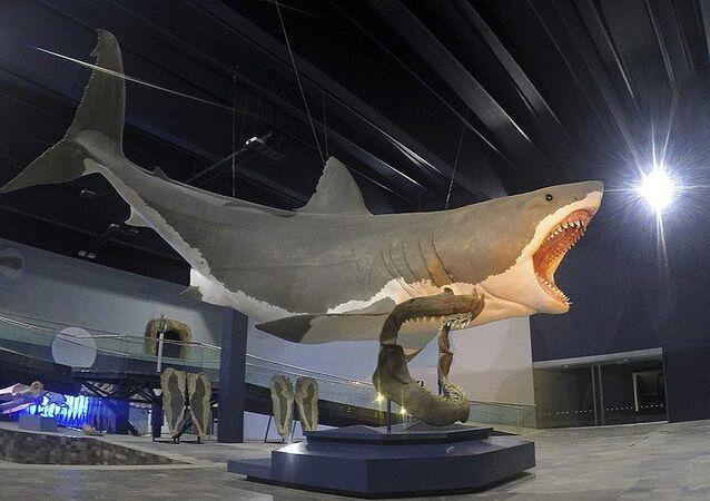 Tubarão megalodonte (imagem ilustrativa)