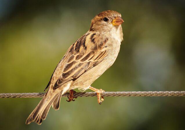 Pássaro (imagem referencial)
