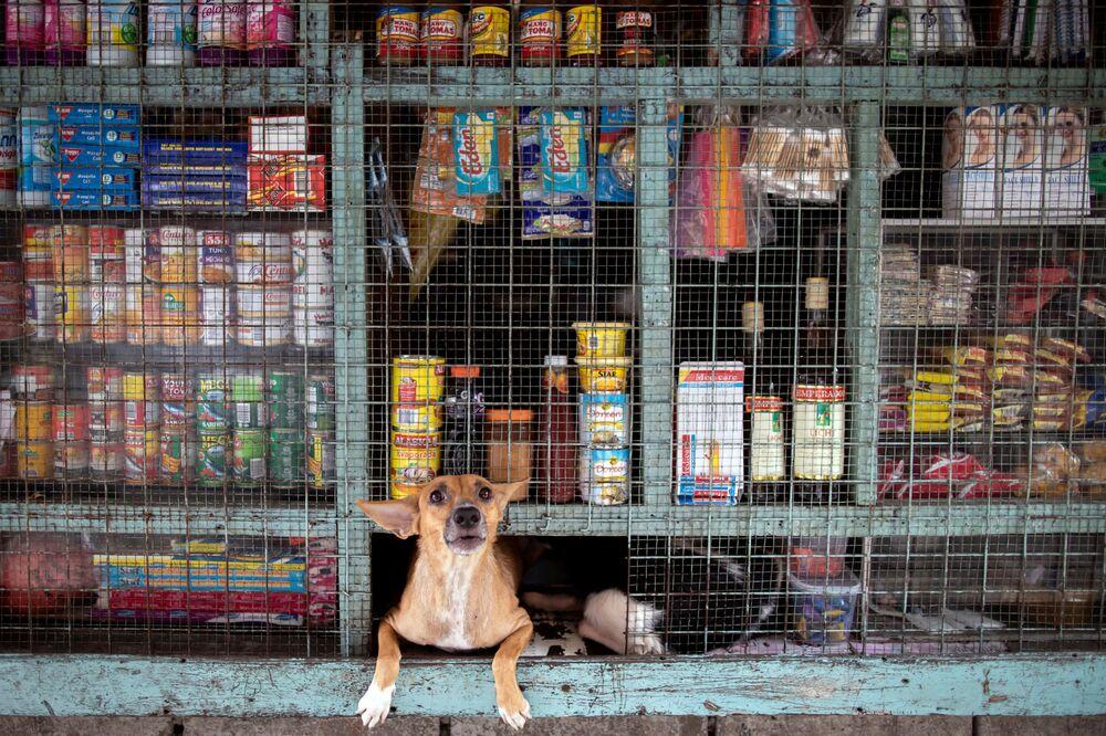 Cachorro espreita de uma loja em Tondo, Manila, Filipinas